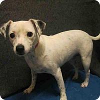 Adopt A Pet :: SPARKLE - Upper Marlboro, MD