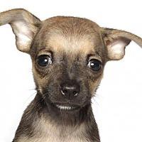 Adopt A Pet :: Cadillac - Oakland Park, FL