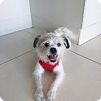 Adopt A Pet :: STANLEY - Beverly Hills, CA