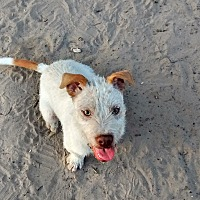 Adopt A Pet :: Lil Meg - Somerville, TX