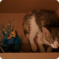 Adopt A Pet :: Ella - Brooklyn, NY