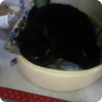 Adopt A Pet :: Blackie - North Kingstown, RI