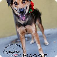 Adopt A Pet :: Maggie - Sherman Oaks, CA
