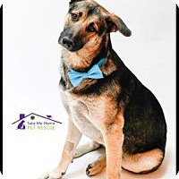 German Shepherd Dog Mix Dog for adoption in Richardson, Texas - Royce
