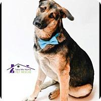 Adopt A Pet :: Royce - Richardson, TX