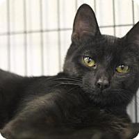 Adopt A Pet :: Jory - Walla Walla, WA