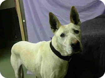 Labrador Retriever Mix Dog for adoption in San Bernardino, California - URGENT on 11/16 @DEVORE
