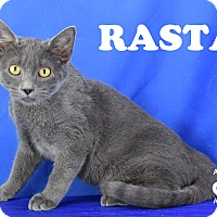 Adopt A Pet :: Rasta - Carencro, LA