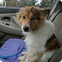 Adopt A Pet :: Penelope - Chantilly, VA
