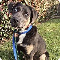 Adopt A Pet :: PENNY - Santa Clarita, CA