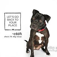 Adopt A Pet :: Cash - Los Angeles, CA