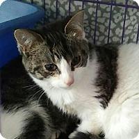 Adopt A Pet :: Trapper - Acme, MI