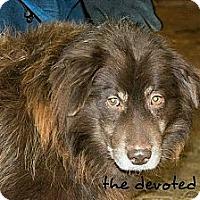 Adopt A Pet :: Reggie - Ortonville, MI