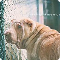 Adopt A Pet :: Phideaux - Gainesville, FL