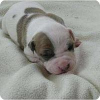 Adopt A Pet :: Payton - Antioch, IL
