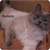 Adopt A Pet :: Rumple - Portland, OR