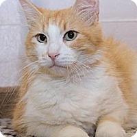 Adopt A Pet :: Blossom - Irvine, CA