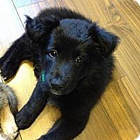 Adopt A Pet :: Posey - Saskatoon, SK