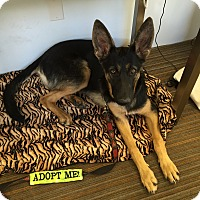 Adopt A Pet :: Maggie Mae- I am SO Sweet! - Redondo Beach, CA