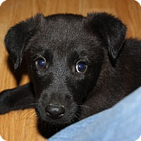 Adopt A Pet :: Zack - kennebunkport, ME