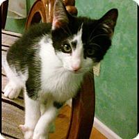 Adopt A Pet :: Forrest - Toms River, NJ