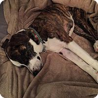 Adopt A Pet :: Hunter - Albemarle, NC