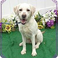 Adopt A Pet :: Coco - Harrisville, RI