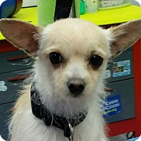 Adopt A Pet :: Bentley - Leduc, AB