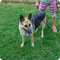 Adopt A Pet :: Shaina - Greeneville, TN