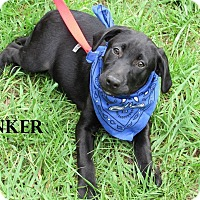 Adopt A Pet :: sinker in CT - Manchester, CT