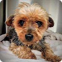 Adopt A Pet :: Brioche - Newark, DE