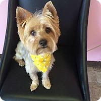 Adopt A Pet :: Rufus - Manassas, VA