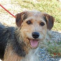 Adopt A Pet :: Barney (27 lb) A Character! - Burlington, VT