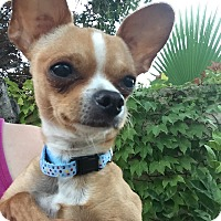 Adopt A Pet :: Dale - Las Vegas, NV