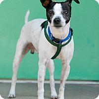 Adopt A Pet :: Jack - Pottsville, PA