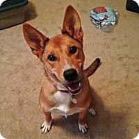 Adopt A Pet :: Ellie Mae - Athens, GA