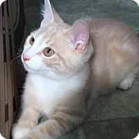 Adopt A Pet :: Dr Peaches - Spencer, NY