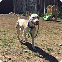 Adopt A Pet :: Drax - Cleveland, OH