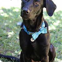 Labrador Retriever Mix Dog for adoption in Alpharetta, Georgia - Lenya
