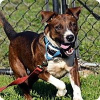 Adopt A Pet :: Bella - Lacon, IL