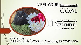 Domestic Mediumhair Cat for adoption in Saylorsburg, Pennsylvania - Coal