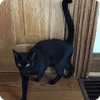 Adopt A Pet :: Sally - Greensburg, PA