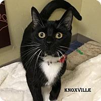 Adopt A Pet :: Knoxville - Independence, MO
