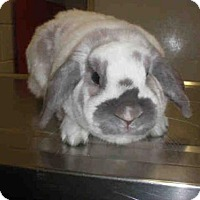 Adopt A Pet :: MARIO - Peoria, IL