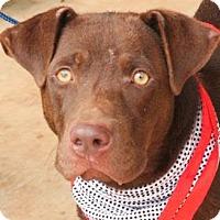 Adopt A Pet :: Murphy - East Randolph, VT