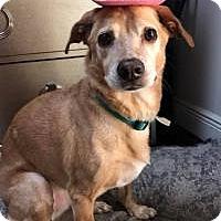 Adopt A Pet :: Georgia - New Smyrna Beach, FL