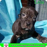 Adopt A Pet :: Leia - Pensacola, FL