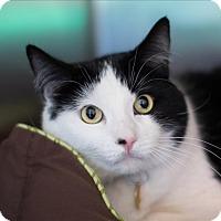 Adopt A Pet :: Oreo - San Luis Obispo, CA