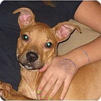 Adopt A Pet :: Radar - Cleveland, OH