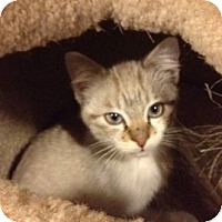Adopt A Pet :: Giancarlo - Byron Center, MI